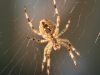 Z_DH_Spinne 1_IMG_0613
